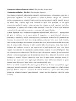 Nematode del marciume dei tuberi (Ditylenchus destructor
