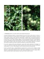 Elenco arbusti con foto