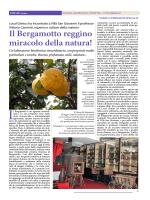 Il Bergamotto reggino miracolo della natura! Un