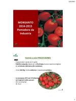 MONSANTO 2014-2015 Pomodoro da Industria - Tomato-Farm
