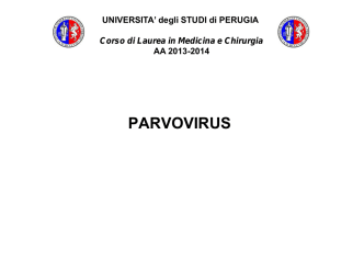 11.parvovirus - Università degli Studi di Perugia