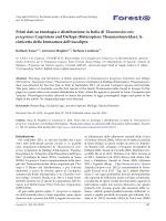 Primi dati su fenologia e distribuzione in Italia di Thaumastocoris