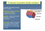 Muscolare cardiaco e liscio [modalità compatibilità]