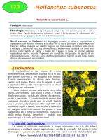 Helianthus tuberosus - Piante spontanee in cucina