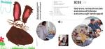 Opuscolo informativo - Scuola Cantonale Operatori Sociali