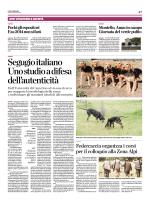 Il cane segugio italiano