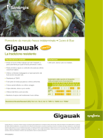 Gigawak - Syngenta