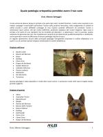 Quale patologia ortopedica potrebbe avere il tuo cane