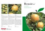 Renoir Sweet Resistants