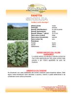 FAVETTA - Pro Seme