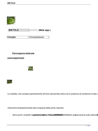 BIETOLE (Beta spp.) Cercospora beticola (cercosporiosi)