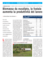 Biomassa da eucalipto, la fustaia aumenta la