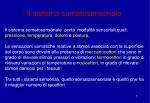 Sistema somatosensoriale