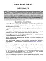 allegato b - Comune di San Lorenzo Nuovo