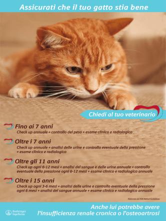 Assicurati che il tuo gatto stia bene