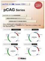 pCAGベクター