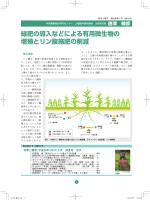緑肥の導入などによる有用微生物の 増殖とリン酸施肥の削減