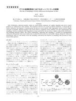 マウス初期胚発生におけるオートファジーの役割
