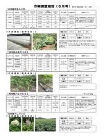 作柄調査報告(6月号)報告者:営農振興課 松本 有希子
