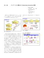 ブロイラーから分離されたMannheimia haemolytica様菌(PDF:567KB)