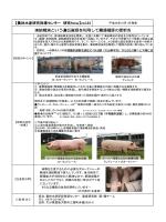 豚凍結精液 [PDFファイル/350KB]