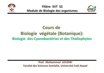 Algues (Phycophytes)