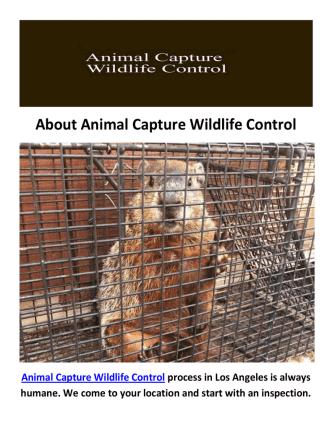 Animal Capture Wildlife Control in Los Angeles, CA