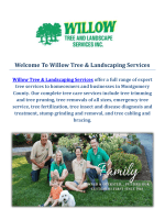 Tree Trimming Service by Willow Tree & Landscaping Services