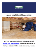 Insight Pest Termite Inspection in Camarillo, CA